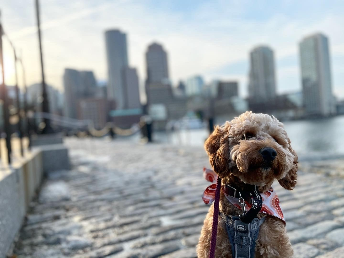 dog at the Seaport