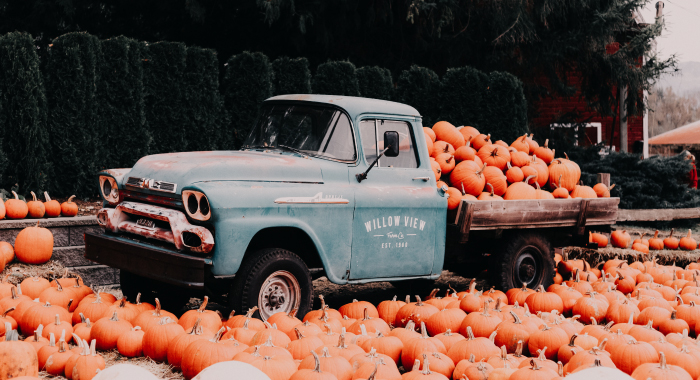 Pickup truck in the middle of a pumpkin patch